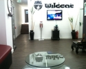 wildcat-4